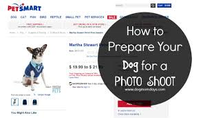 how to prepare your dog for a photo shoot dog mom days how to prepare your dog for a photo shoot