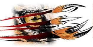 <b>Eye on the Tigers</b>