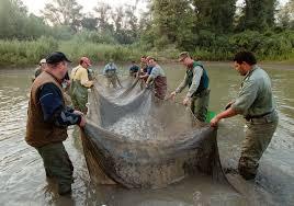 Vazamento de cianeto de Baia Mare em 2000