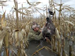 michigan s 7 managed waterfowl hunt areas offer unparalled michigan s 7 managed waterfowl hunt areas offer unparalled opportunities