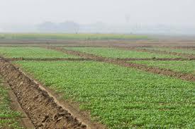 organic farming archives geography and you organic farming in vidarbha