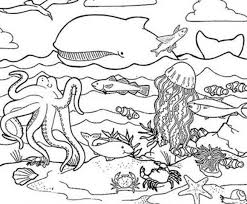 Small Picture Under The Sea Coloring Pages 224 Coloring Page