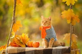 Image result for images cat autumn