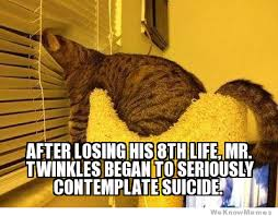 Depressed Cat   WeKnowMemes via Relatably.com
