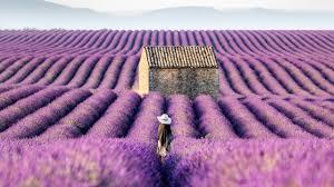 <b>Lavender Fields</b> of the Provence, <b>France</b> (4K Stock) - YouTube
