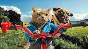 <b>Cat</b> and Dog Road Trip - YouTube