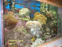 Feature Article: <b>Silica</b> In Reef Aquariums — Advanced Aquarist ...