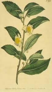 <b>Чай</b> — Википедия