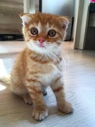 Кот без <b>сапог</b>: Горячее. Самые горячие публикации по теме: «Кот ...
