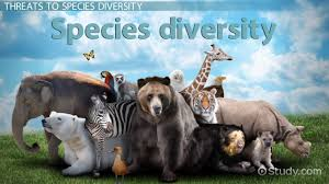 what is biodiversity definition and relation to ecosystem what is species diversity definition importance examples