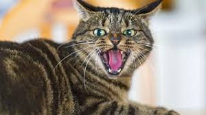 What research says about <b>cats</b>: they're selfish, unfeeling ...