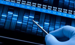 Image result for dna profiling