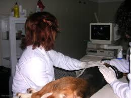 Resultado de imagen de ecografia de perro