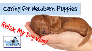 How to Care for Newborn <b>Puppies</b> - Caring for a Litter of <b>Puppies</b> ...