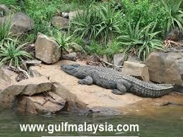 نتيجة بحث الصور عن جزيرة التماسيح ماليزيا
