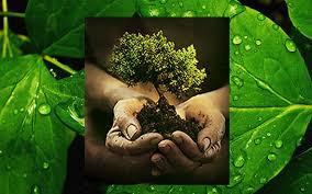 Ranking mundial deja en primer lugar a Chile por desempeño ambiental forestal