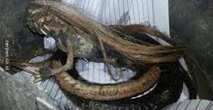 Hasil gambar untuk foto ular berkepala anjing.