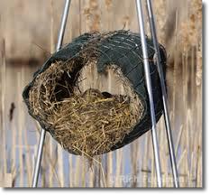 FL amp WNYWA   Mallard Nesting ProjectMallard Hen Nest