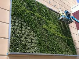 living wall kit tropical plants ambius team maintaining exterior green wall