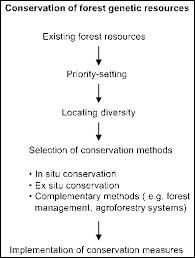 short essay on preservation of forest   essay for you    short essay on preservation of forest   image