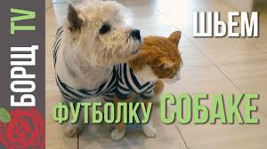 <b>Одежда</b> для собак из старых вещей | Как сшить одежду для ...