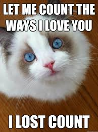 Let me count the ways I love you I lost count - anti grumpy cat ... via Relatably.com