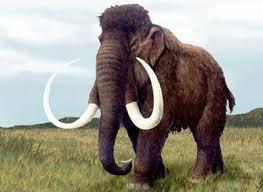 Resultado de imagem para mamutes