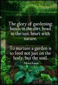 Gardening Quotes on Pinterest | Garden Quotes, Gardening and Gardens via Relatably.com
