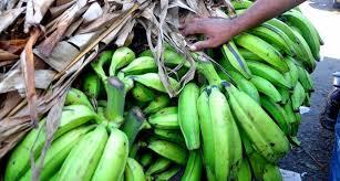 Resultado de imagen para Unidad de plátano baja hasta 7 pesos