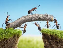 stock photography tips from lasse behnke aka lassedesignen teamwork team of ants costructing bridge