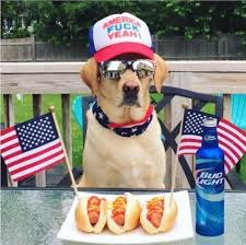 27 Hilarious Memes of <b>Dogs</b> Wearing <b>Hats</b> – Tail Threads