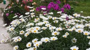 <b>Цветущий сад</b> без лишних затрат Многолетники из семян – это ...