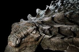 The Amazing <b>Dinosaur</b> Found (Accidentally) by Miners in Canada