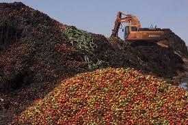 Картинки по запросу санкции Издержки Евросоюза польские яблоки