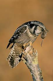 Image result for happy hawk