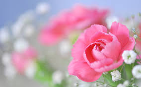 Image result for peony