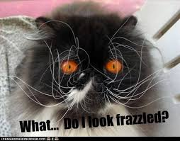 Image result for You Say FRAZZLED