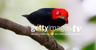 Getty Images: Stock Photography, Royalty-Free Photos & The Latest ...