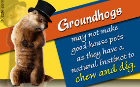 Is it Really Wise to Keep <b>Groundhogs</b> as Pets?