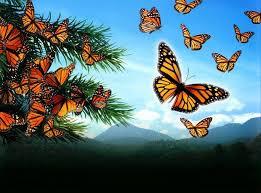"""Résultat de recherche d'images pour """"symbolique du papillon"""""""