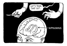 Afbeeldingsresultaat voor hippocampus cartoon