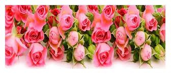 US Seller. 28x70cm Pink Roses Large 5D <b>Diamond Painting</b> kit.   Etsy