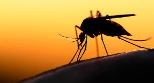 Как избавиться от <b>комаров</b> в квартире: от народных средств до ...