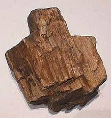 Image result for old geology wood from tree to chair