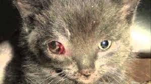 animal abuse essays animal cruelty photo essay
