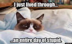 Grumpy Cat - Bedtime on Pinterest | Grumpy Cat, Grumpy Cat Meme ... via Relatably.com