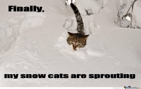 Cat In Snow Memes. Best Collection of Funny Cat In Snow Pictures via Relatably.com