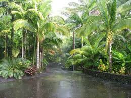 1000 images about tropical landscaping ideas on pinterest tropical landscaping tropical gardens and tropical bedroommagnificent lush landscaping ideas