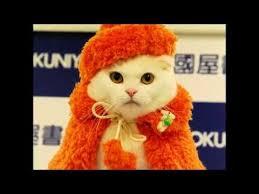 Гламурная <b>одежда для кошек</b>. Кошки модницы в кошачьей одежде