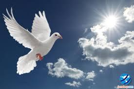 Resultado de imagem para imagens do espírito santo de deus